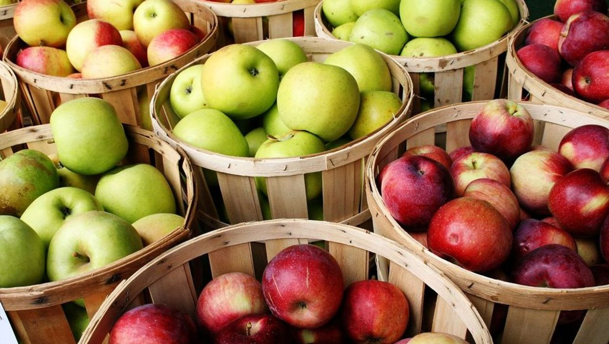 Best Montreal Apple Picking Spots (UPDATED)