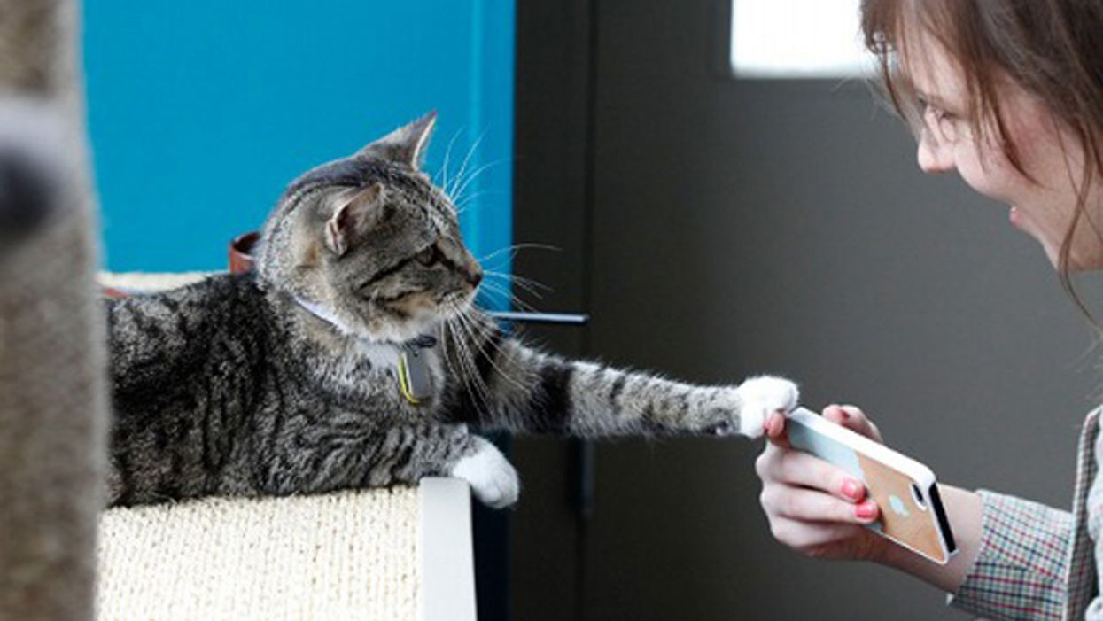 The Very First Look Inside Of Montreal's Cat Café MTL On Saint Denis Street