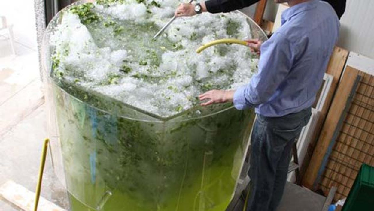 Montreal Set To Break Record For Largest Mojito In The World Today
