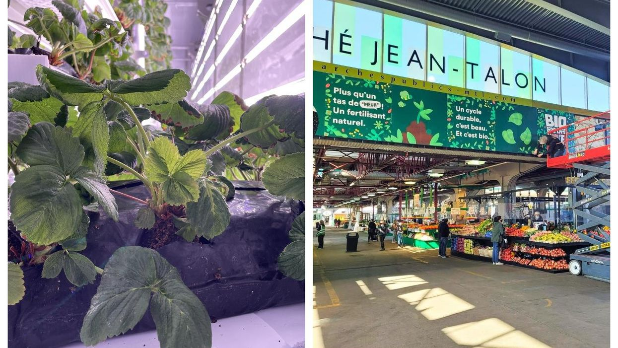 Jean-Talon Market Has Free Strawberry Plants To Give Out