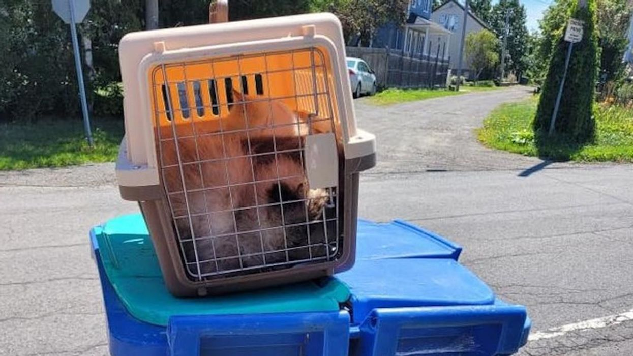 3 Cats Found In Garbage Bin Outside Montreal
