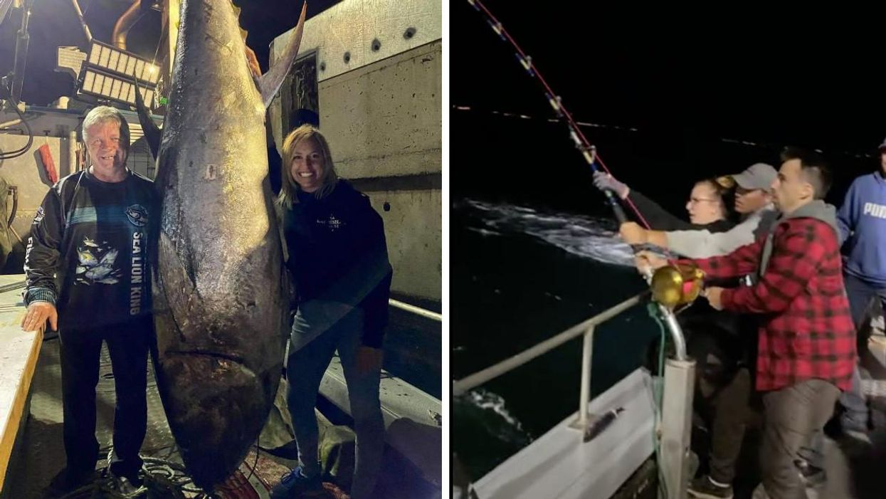 A 620-Pound Tuna Was Caught Off The Coast Of Quebec (PHOTO)