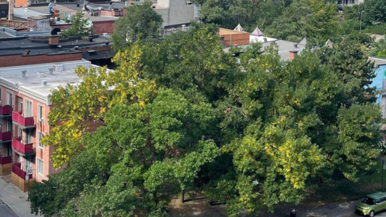 Some Trees In Montreal Appear To Already Be Changing Colours (PHOTO)