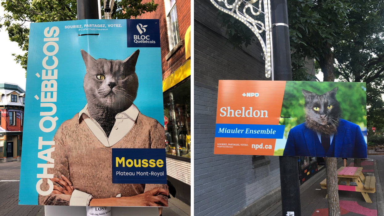 Cat Election Signs Are Popping Up In Montreal & They're Pretty Purr-suasive
