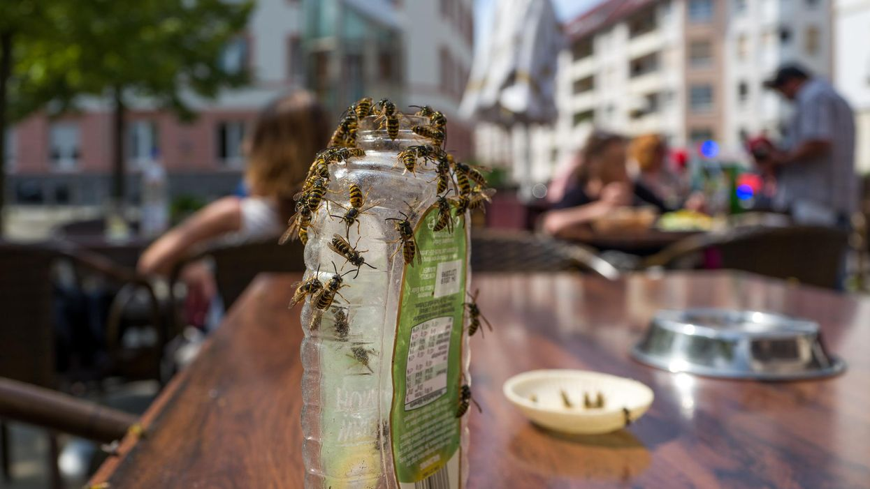 Why Wasps Are All Over Montreal Right Now & What To Do About Them, According To An Expert