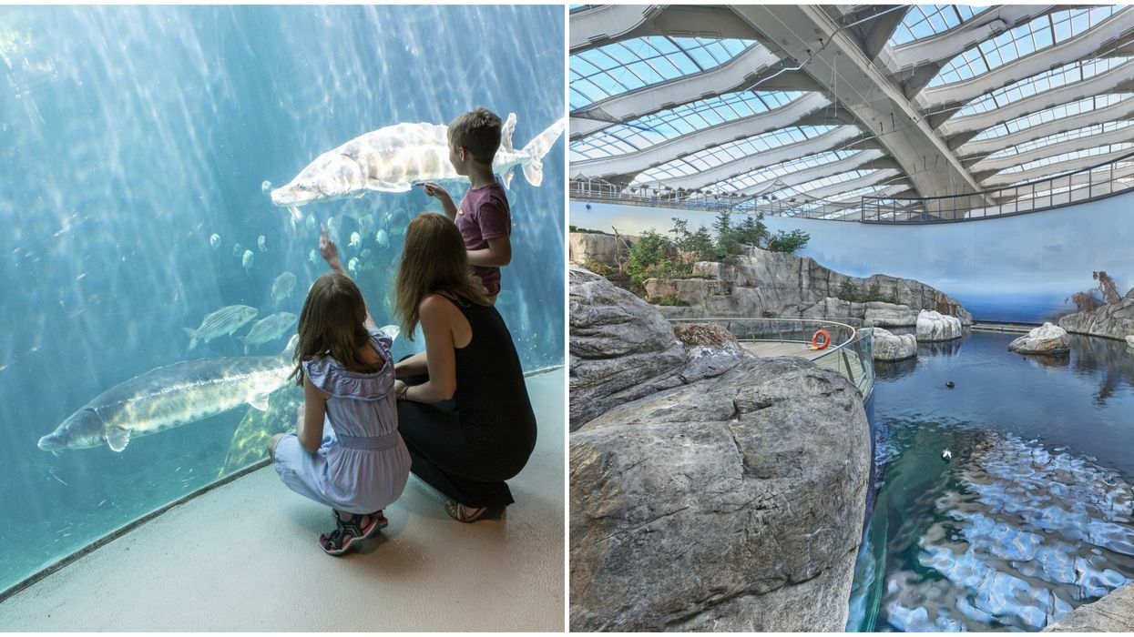 Here's What The Renovated Montreal Biodome Looks Like On The Inside (PHOTOS)