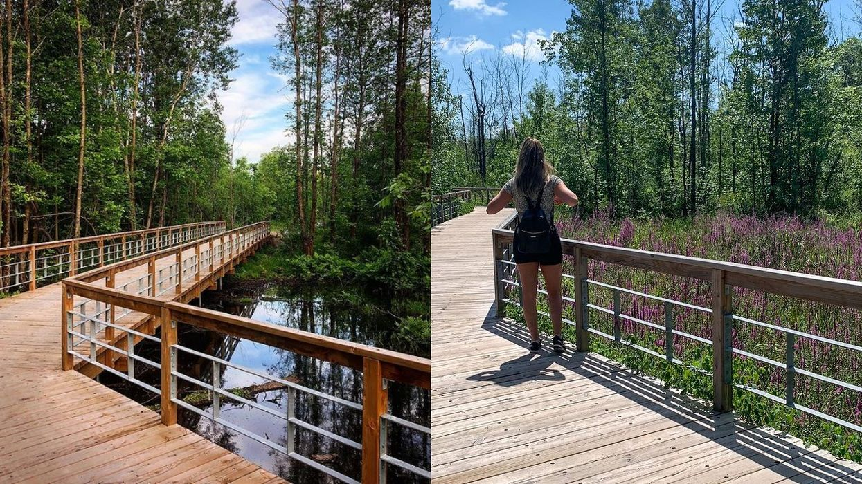 The Boisé du Tremblay Is An Easy Hike Right Outside Montreal