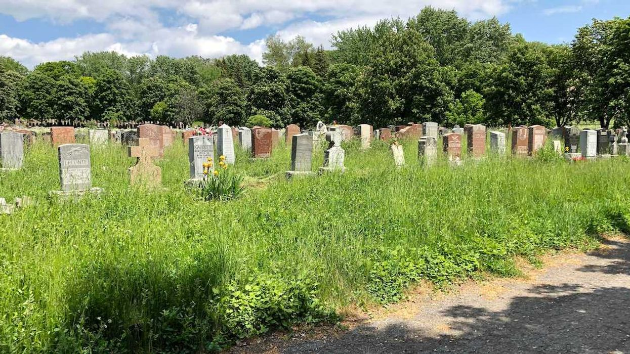 Groundhogs Dig Up Bones At Montreal Notre-Dame-des-Neiges Cemetery