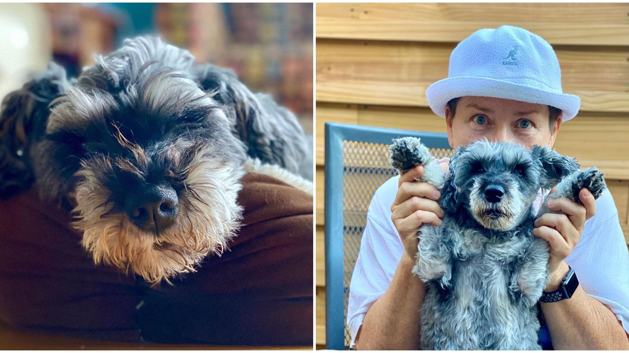 Montreal's Newest Celebrity Is A 'Talking' Dog Who Gives Pandemic Advice