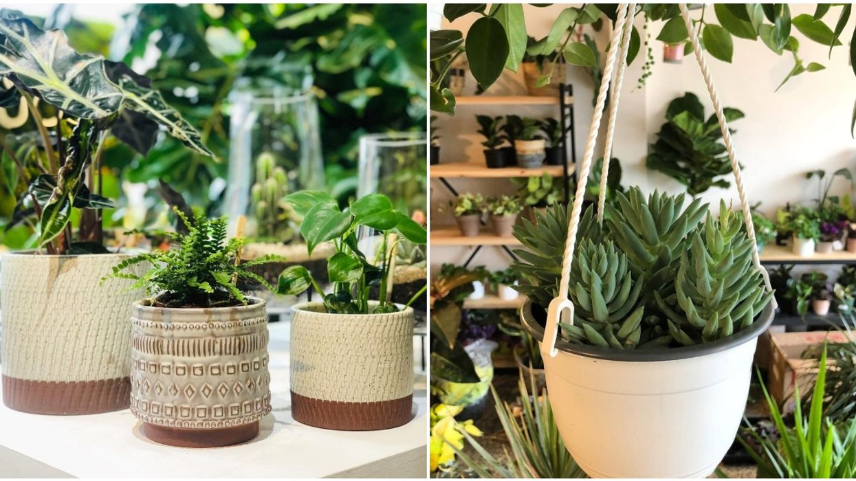 7 Spots In Montreal To Check Out When You're In Search Of A New Plant Friend