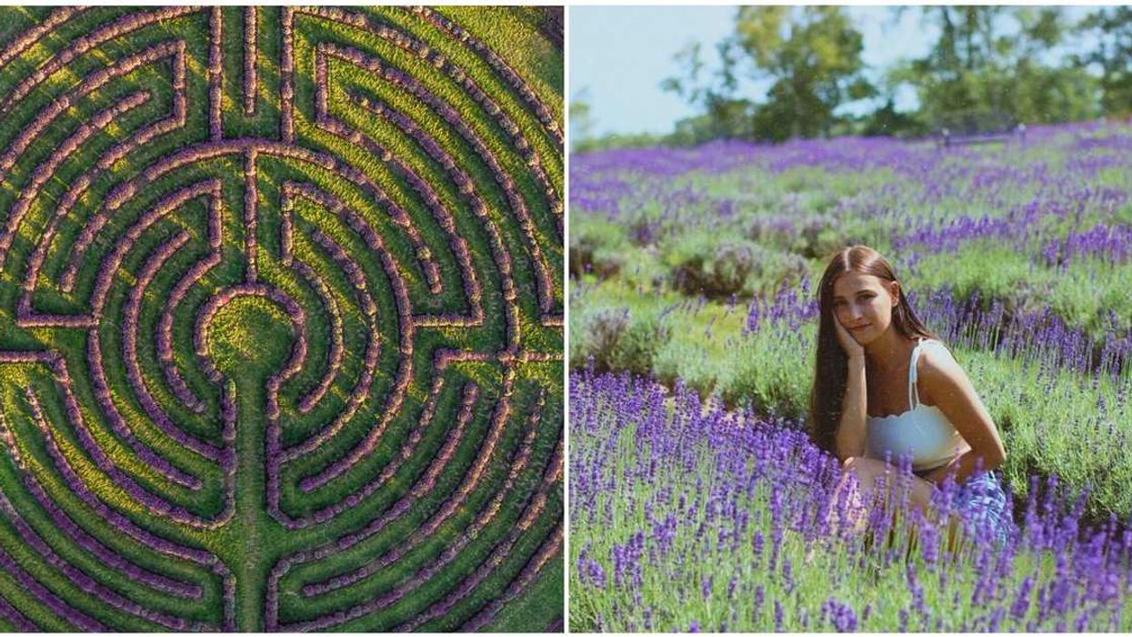 A Lavender Maze Exists Near Montreal & It's Impossible To Get Lost In It (PHOTOS)