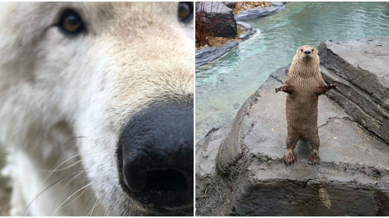 The Montreal Ecomuseum Is Posting Really Cute Animal Photos & Videos To Cheer You Up