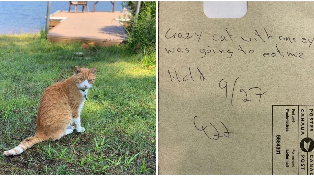 """Canada Post Mailman Scared 1-Eyed Cat Would """"Eat Him"""" Refused To Visit Montreal Home"""