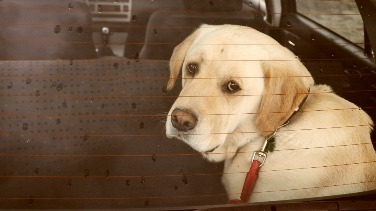 Quebec Authorities Can Take Away Your Dog Forever If You Leave It In A Hot Parked Car