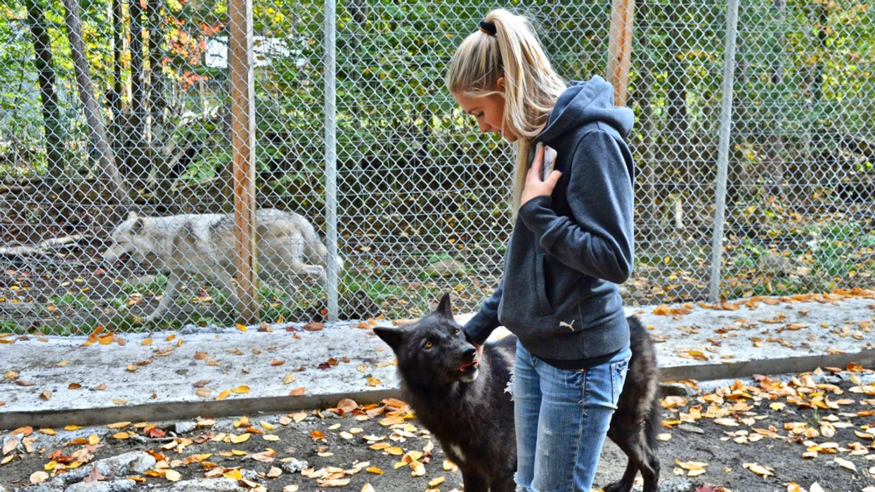 Another Zoo Is Rescuing The Animals Who Faced Cruelty And Neglect At St-Edouard Zoo