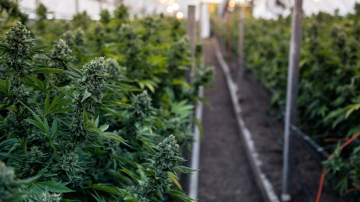The SQDC In Quebec Can't Restock Its Marijuana Supply For Another Six Months