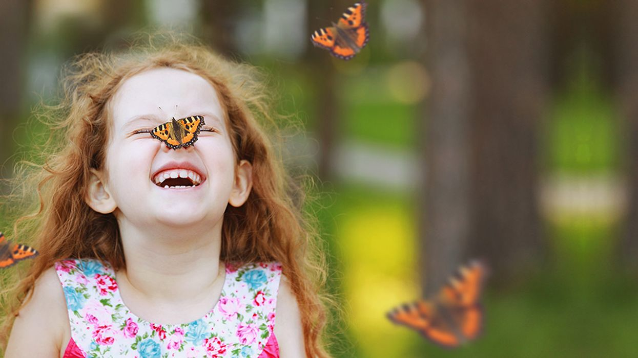 """Montreal Is Hosting A """"Butterfly Festival"""" At Jardin Botanique"""