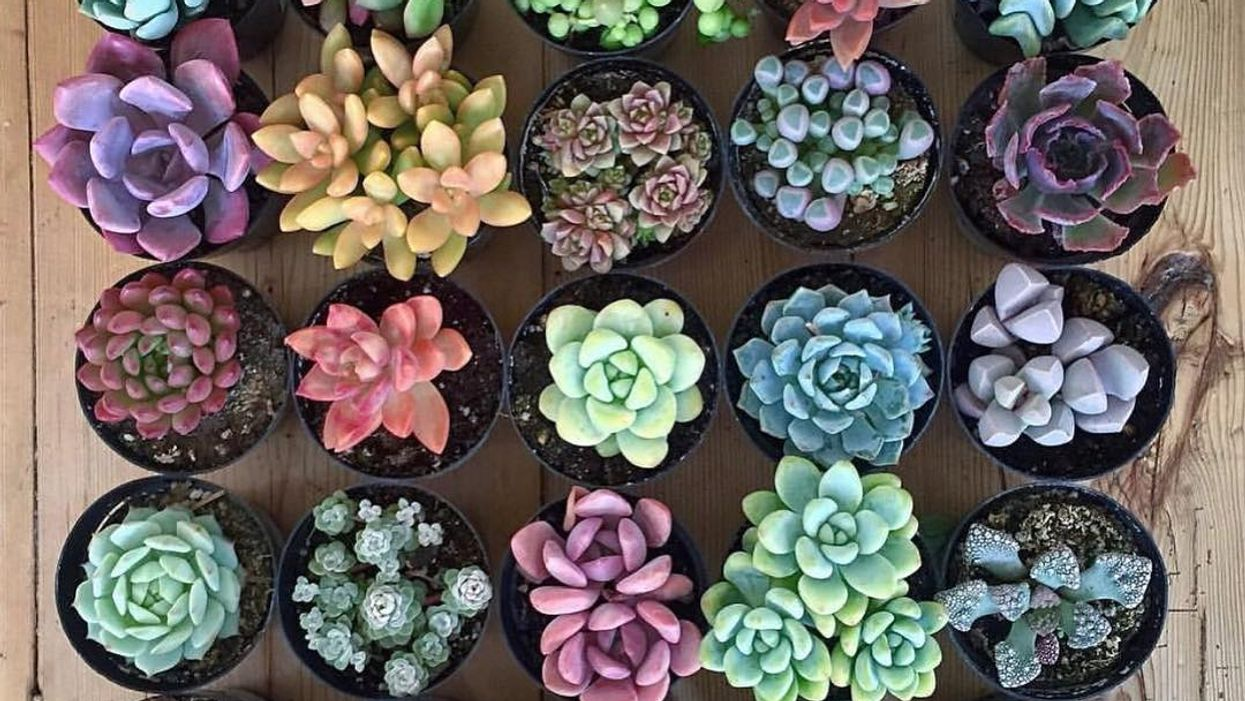 "Montreal Hosting Huge ""Mini Cactus & Succulent"" Sale This Weekend"