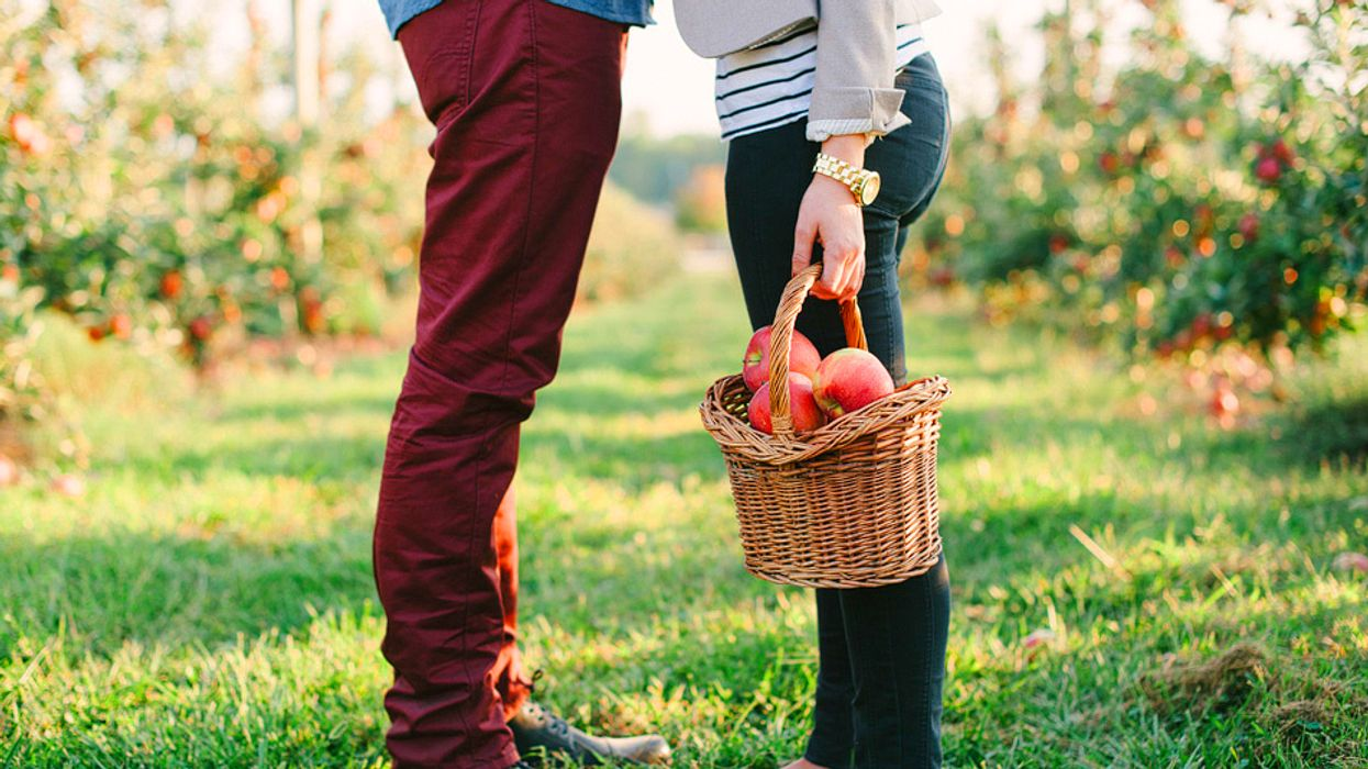 Best Montreal Apple Picking Orchards 2015