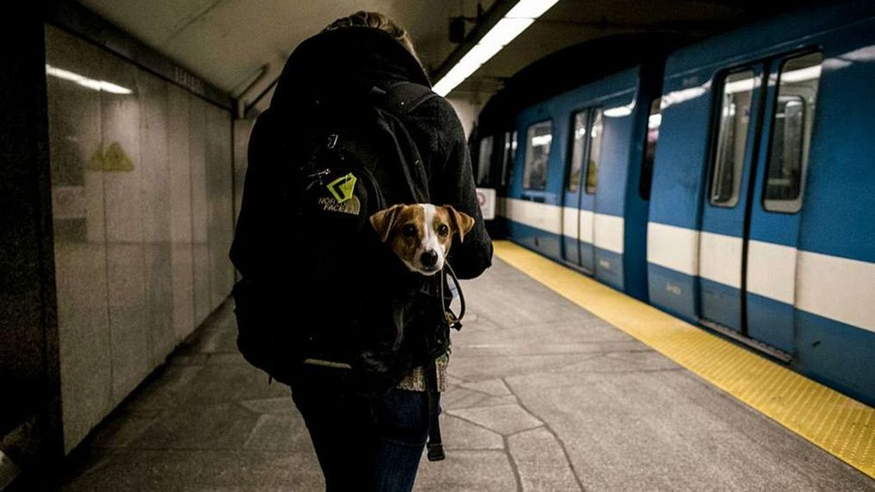 Dog In The Montreal Metro