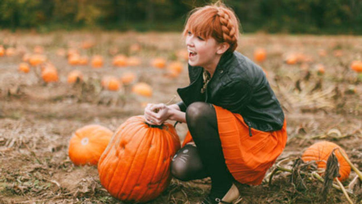 Best Montreal Pumpkin Picking Spots