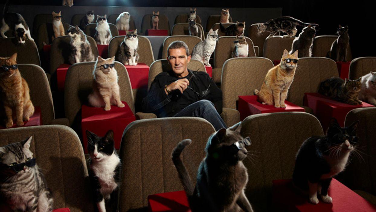 Montreal's 2014 International Cat Film Festival Begins Today