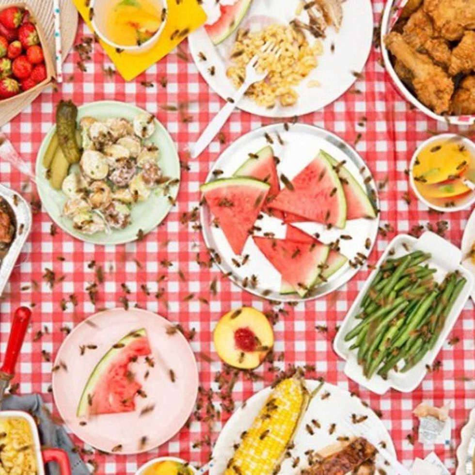 Montreal Photography Essay 'Meals Interrupted' Showcases The Artistic Side Of Food