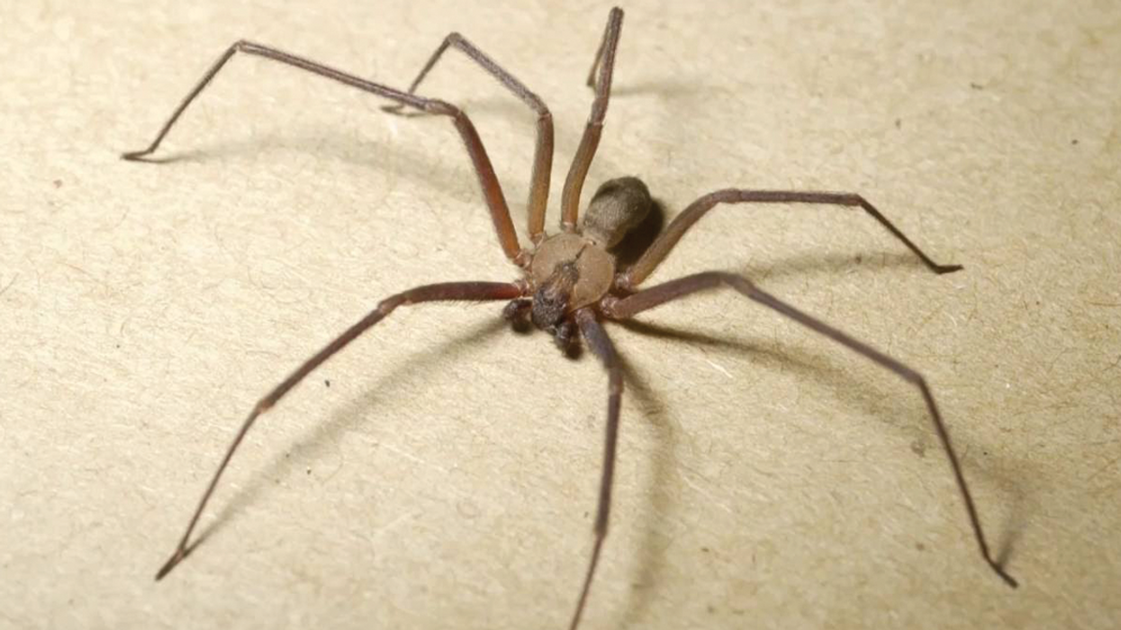 There Are So Many Giant Spiders In Canada That They're Now Invading Government Buildings