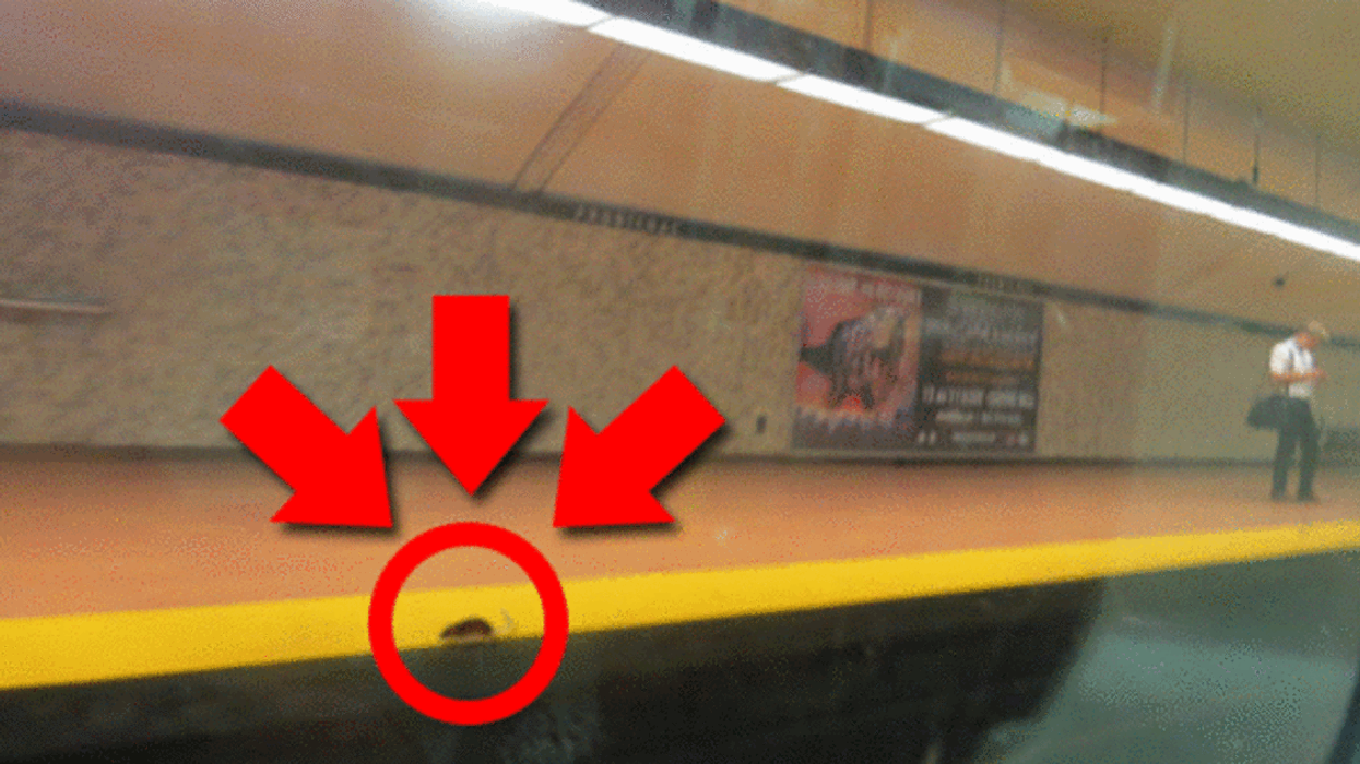 Montreal's Most Infested STM Metro Stations