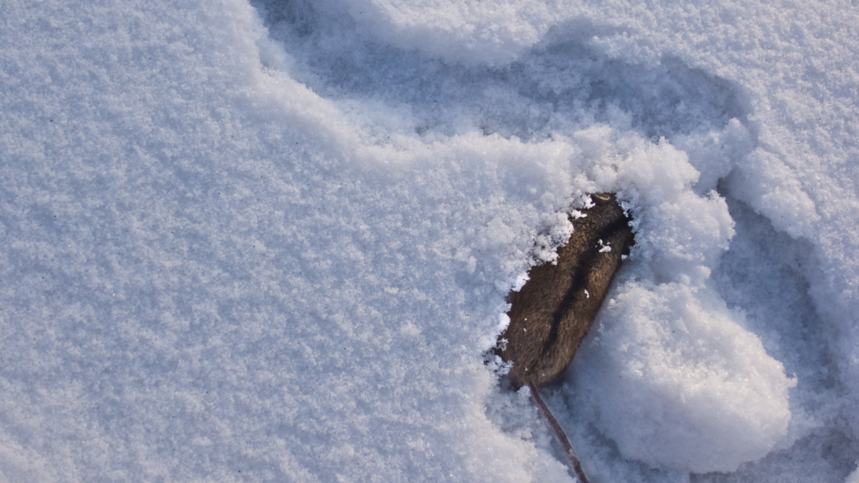 Rats Are Running At People Outside Of Montreal's Papineau Metro Station Park