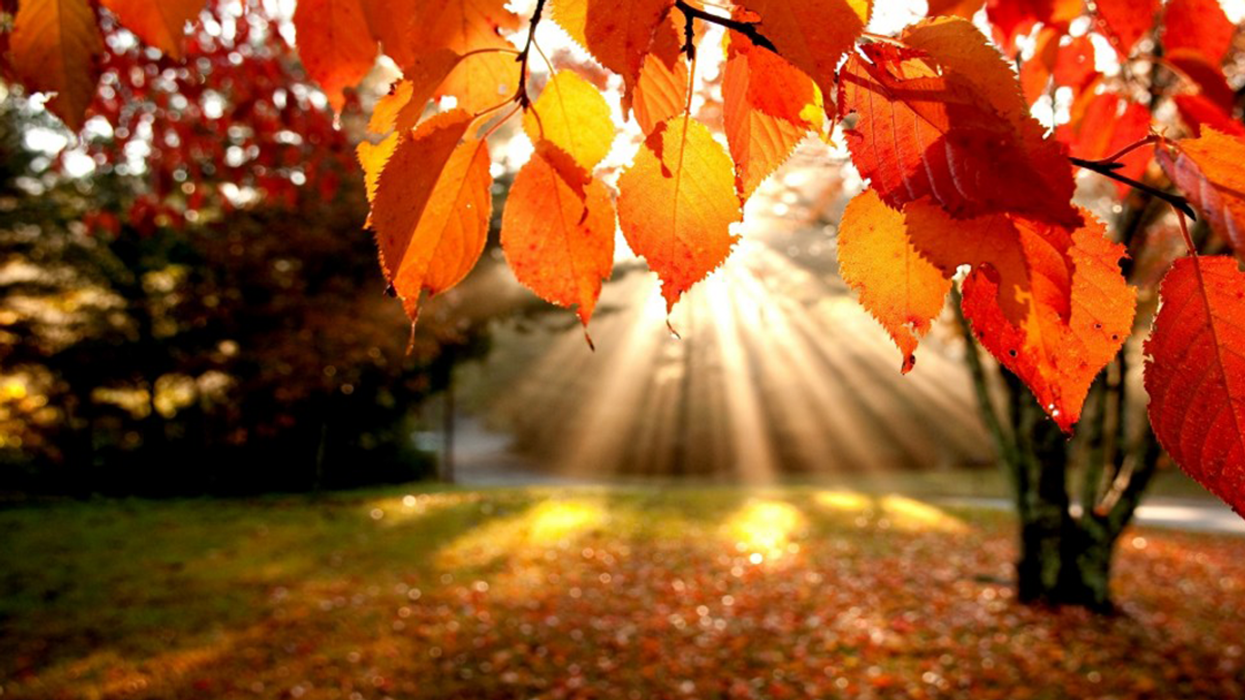 """Warning: Montreal To Be Hit With Brutal """"Record Breaking"""" Fall Heatwave"""