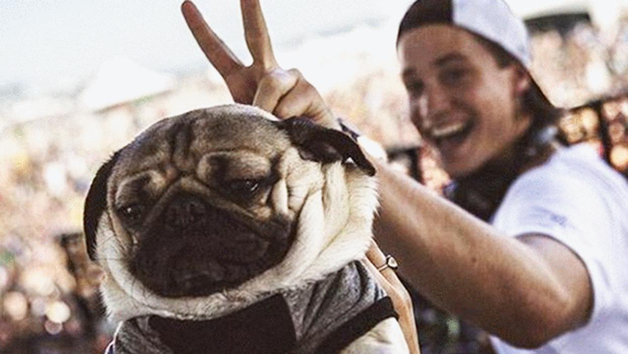 """Montreal Is Hosting Quebec's Biggest """"Dog Festival"""" Ever"""