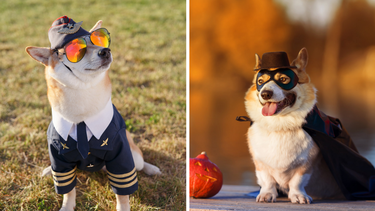 Montreal Is Having A Shiba vs. Corgi Halloween Party & We Dare You To Find Something Cuter