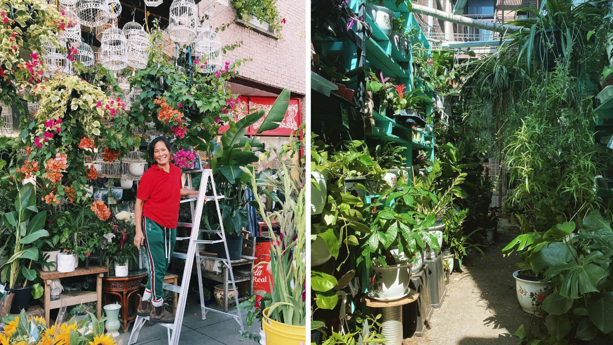 Montreal's Dragon Flowers Shop Is Having A Big Sale This Weekend With Up To 50% Off Plants