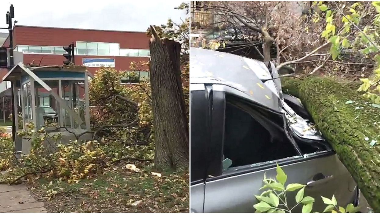 Montreal Wind Storm Knocks Down Trees & Tears Up Roofs (Photos & Videos)