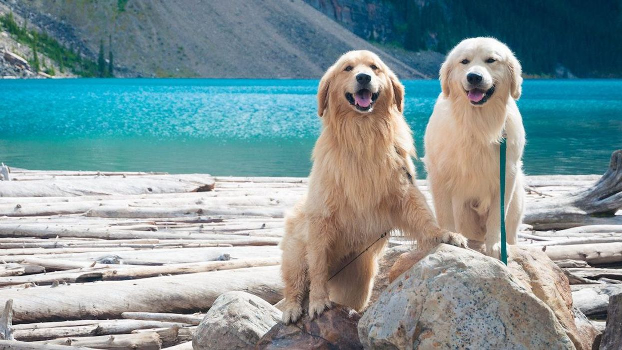The Most Popular Dog Breed In Every Canadian Province Was Revealed In A Survey