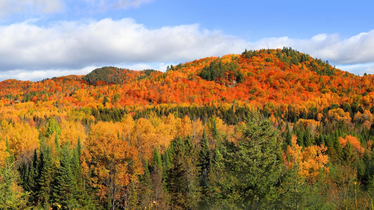 This Fall Foliage Map Of Quebec Shows Exactly When & Where To See Leaves At Peak Pretty
