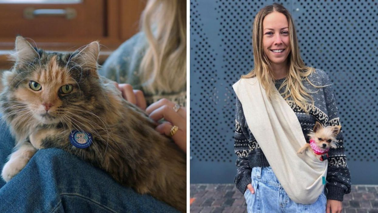 This Montreal Vet Adopts All Of Her Pets & Here's Why She Says You Should Too