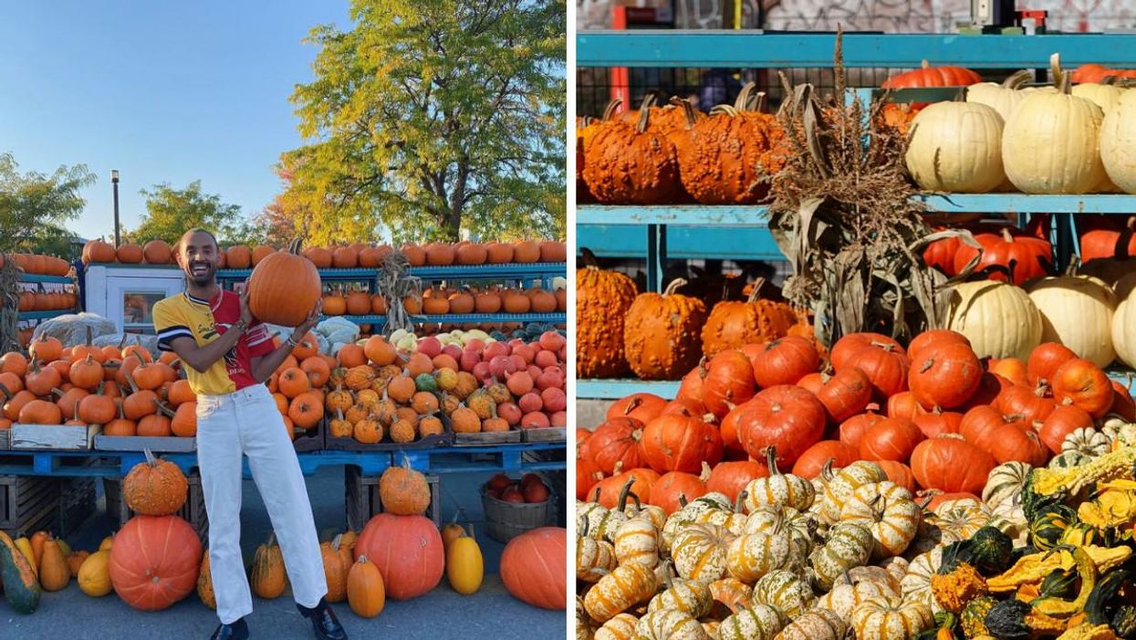 Wondering Where To Buy Pumpkins In Montreal? Check Out These 6 Spots
